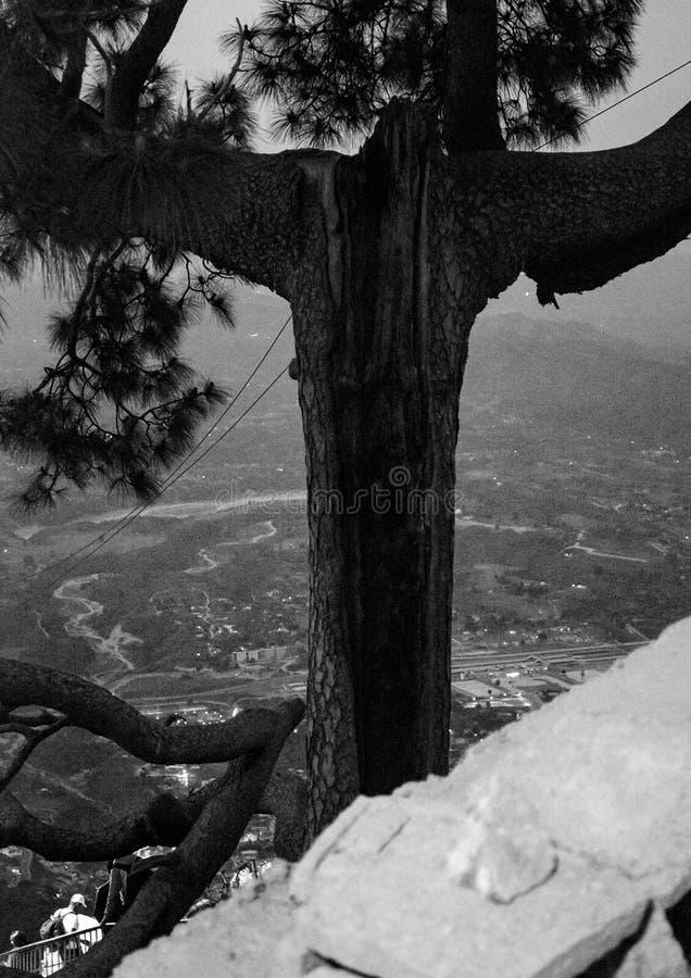 Χριστός το δέντρο απελευθερωτών στοκ εικόνες