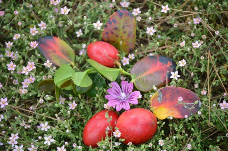 Χρονικά φρούτα και λουλούδια Πάσχας στοκ εικόνες