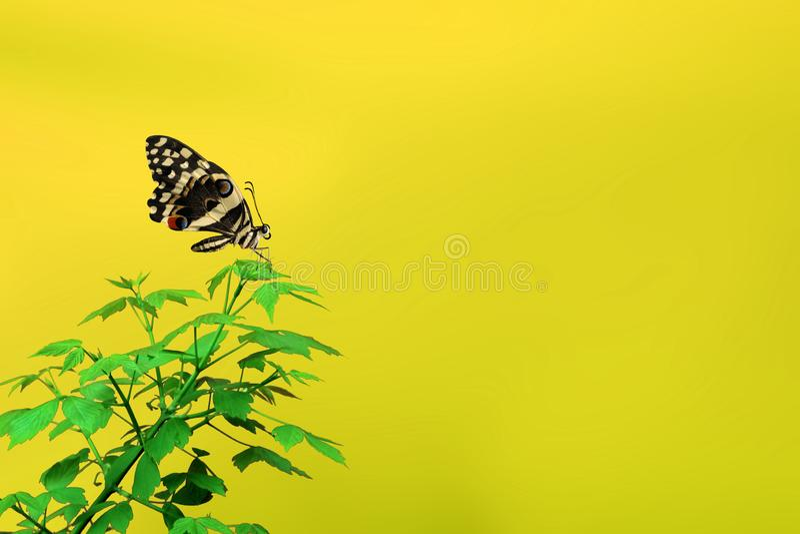 Χρονική έννοια άνοιξη, όμορφη πεταλούδα και κενή περιοχή για το κείμεν στοκ εικόνες με δικαίωμα ελεύθερης χρήσης