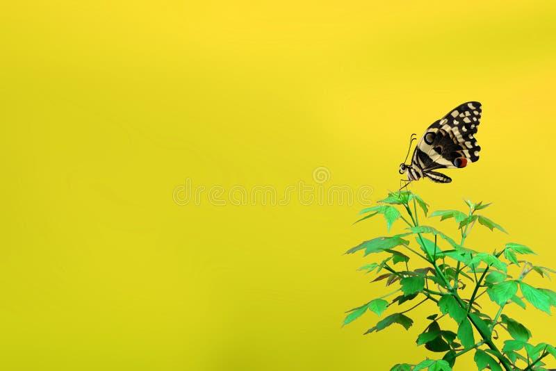 Χρονική έννοια άνοιξη, όμορφη πεταλούδα και κενή περιοχή για το κείμεν στοκ φωτογραφίες