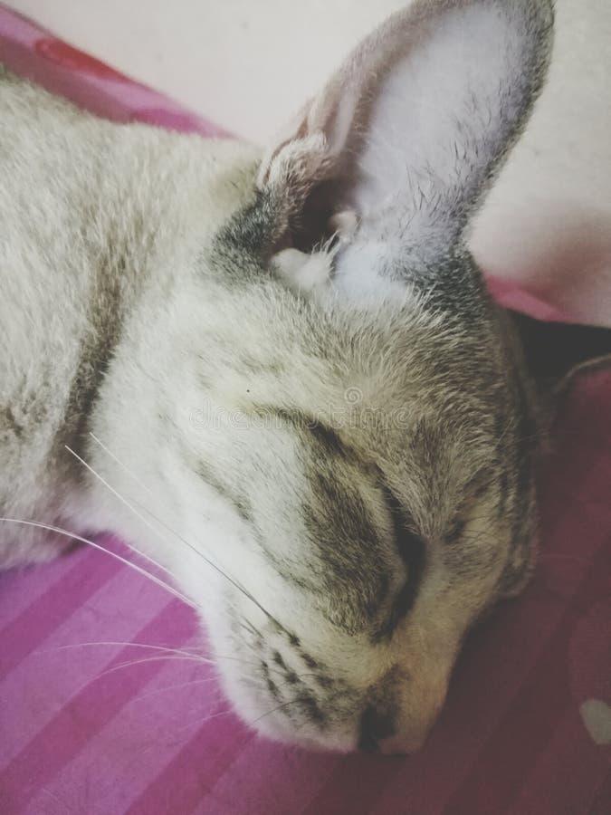 Χρονικός ύπνος στοκ εικόνες