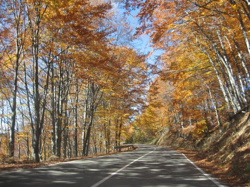 Χρυσά δάση στοκ εικόνες με δικαίωμα ελεύθερης χρήσης