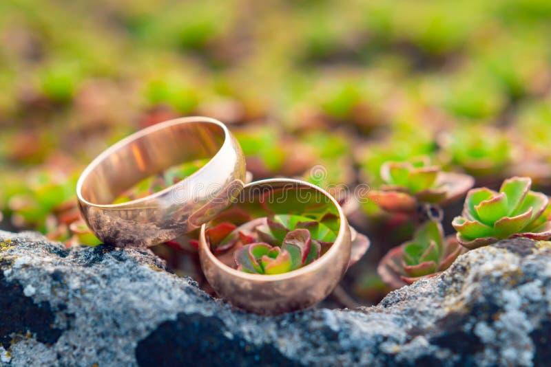 Χρυσά γαμήλια δαχτυλίδια επάνω στα μικρά succulents στοκ φωτογραφία
