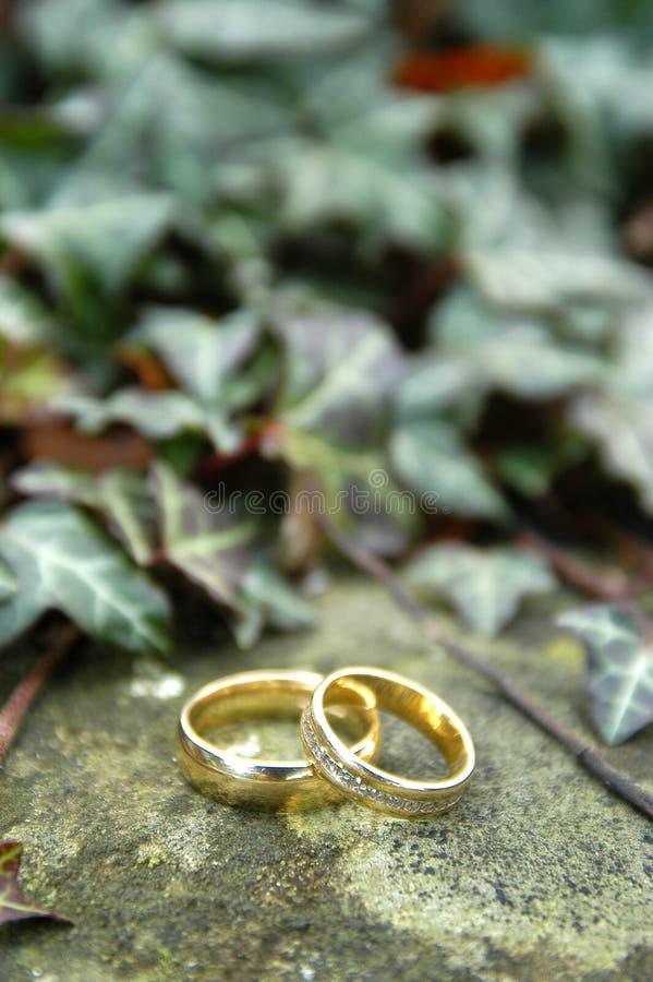 χρυσά δαχτυλίδια δύο γάμο στοκ φωτογραφία