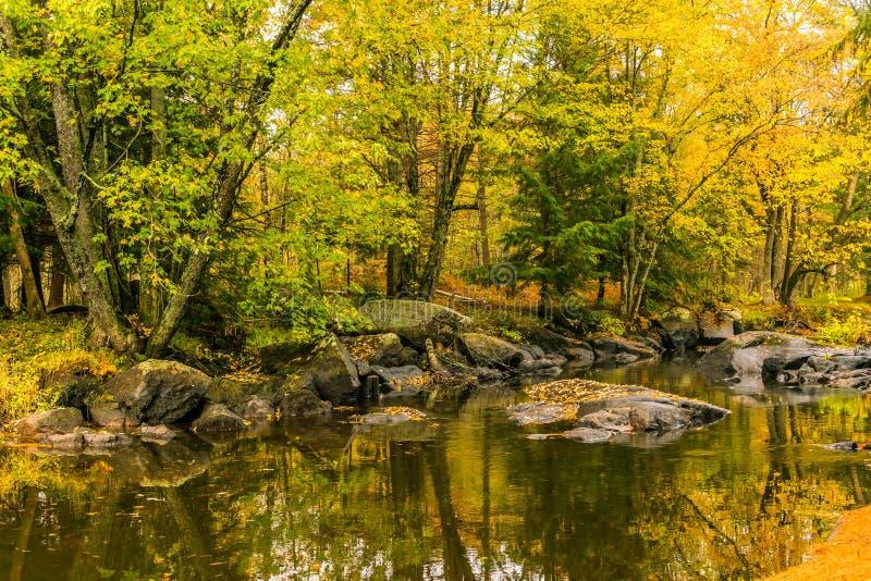 Χρυσά και πράσινα πρόωρα χρώματα φυλλώματος φθινοπώρου, αντανάκλαση στο stil στοκ εικόνες