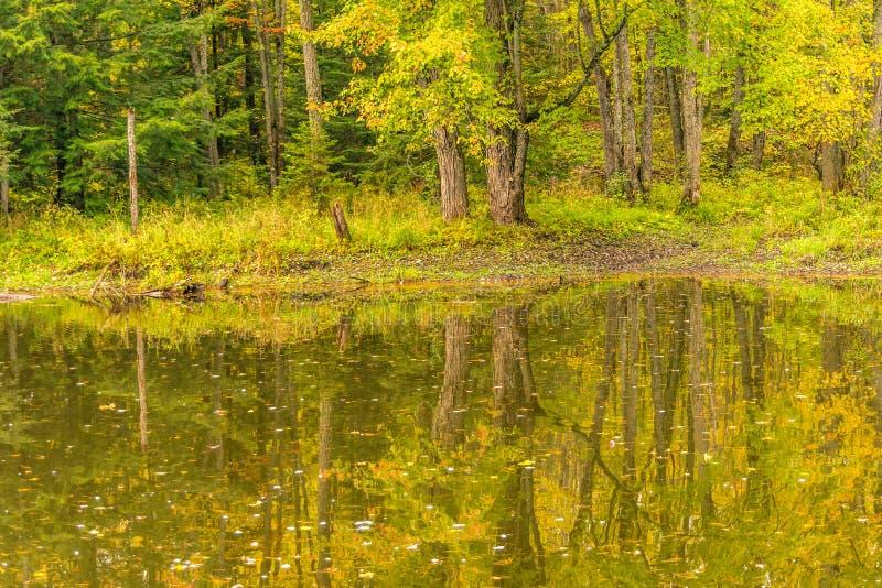 Χρυσά και πράσινα πρόωρα χρώματα φυλλώματος φθινοπώρου, αντανάκλαση στο stil στοκ εικόνες με δικαίωμα ελεύθερης χρήσης