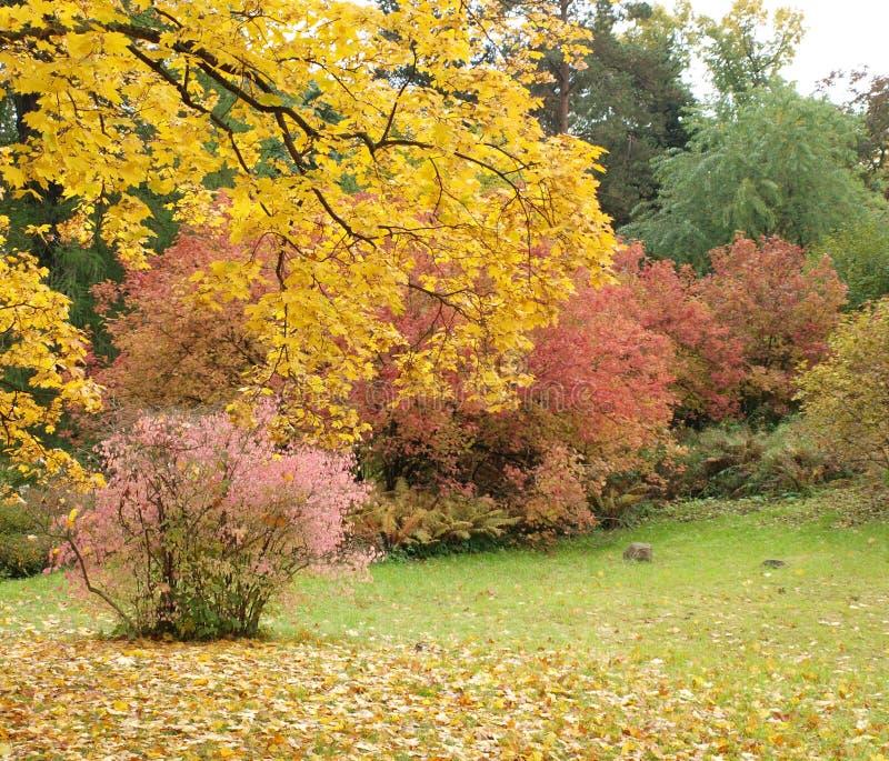 Χρυσά πυροτεχνήματα φθινοπώρου στοκ φωτογραφίες με δικαίωμα ελεύθερης χρήσης