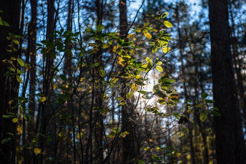 χρυσά χρωματισμένα φύλλα φθινοπώρου με τους κλάδους υποβάθρου και δέντρων θαμπάδων στοκ εικόνες