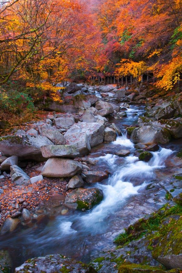 Χρυσά χρώματα του δάσους και του ρεύματος στοκ φωτογραφία