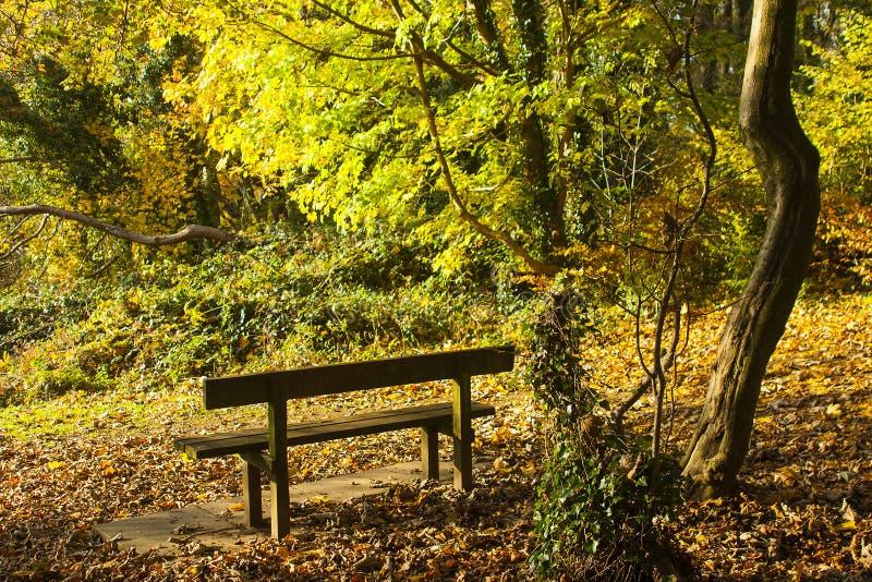 Χρυσά χρώματα φθινοπώρου ως ραβδώσεις ήλιων μέσω του ξέφωτου στο ξύλο Killynether στο Hill πύργων Scrabo σε Newtownards, κομητεία στοκ εικόνα