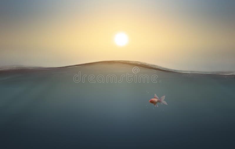 Χρυσά ψάρια κάτω από το θαλάσσιο νερό διανυσματική απεικόνιση