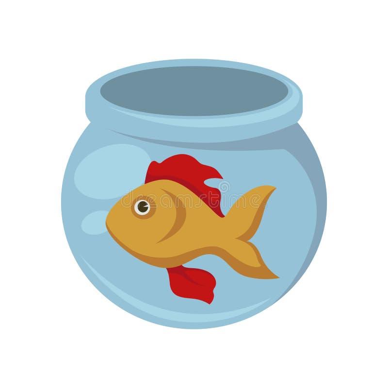 Χρυσά ψάρια με τα κόκκινα βατραχοπέδιλα στο στρογγυλό ενυδρείο ελεύθερη απεικόνιση δικαιώματος