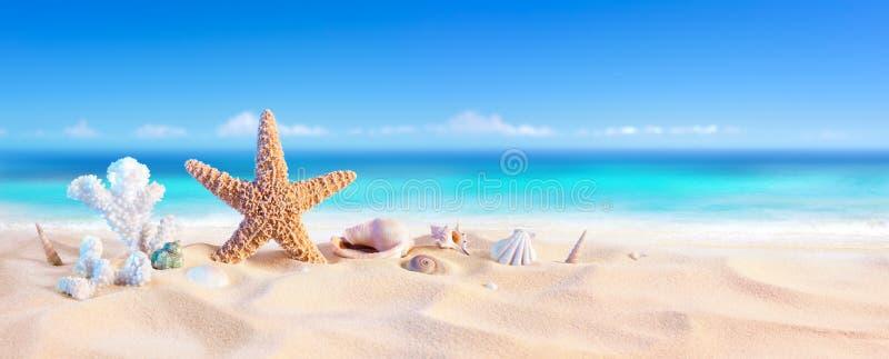 Χρυσή άμμος με το θαλασσινό κοχύλι και τον αστερία στοκ φωτογραφία