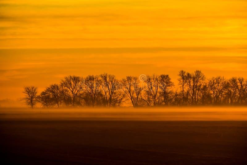 Χρυσή ανατολή του ηλίου με ομίχλη και νεκρά δέντρα στοκ φωτογραφία με δικαίωμα ελεύθερης χρήσης