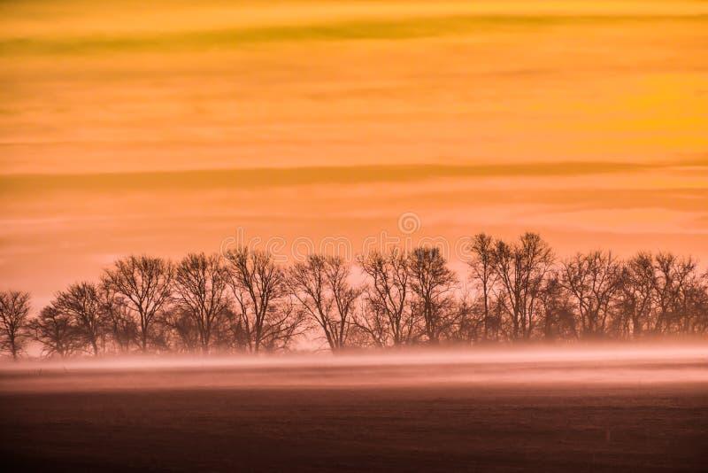 Χρυσή ανατολή του ηλίου με ομίχλη και νεκρά δέντρα στοκ εικόνες με δικαίωμα ελεύθερης χρήσης