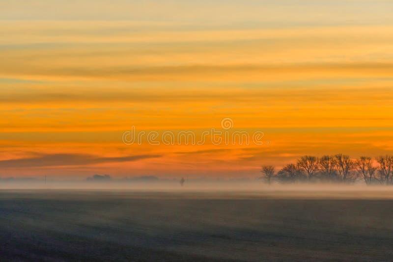 Χρυσή ανατολή του ηλίου με ομίχλη και νεκρά δέντρα στοκ φωτογραφία