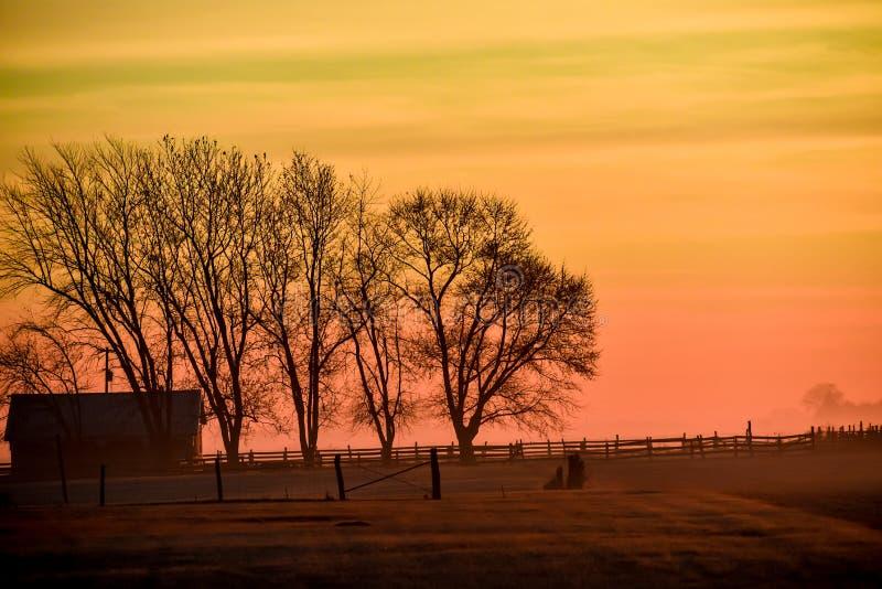 Χρυσή ανατολή του ηλίου με ομίχλη και νεκρά δέντρα στοκ εικόνες