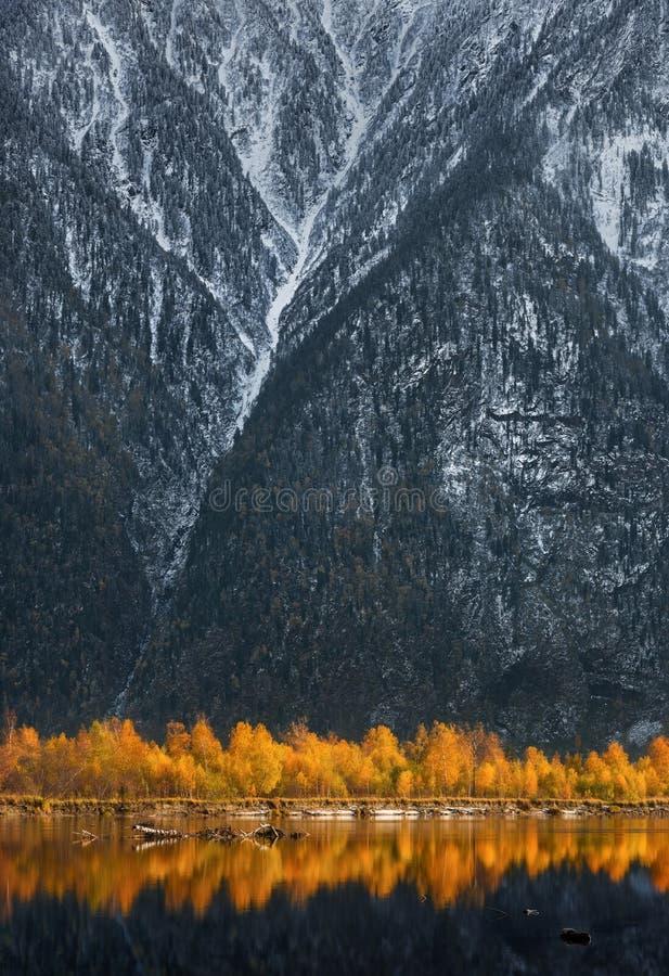 Χρυσή αντανάκλαση των δέντρων Beerch φθινοπώρου στο μπλε νερό στο ηλιοβασίλεμα Τοπίο με τα δέντρα φθινοπώρου και τα χιονισμένα δύ στοκ φωτογραφίες