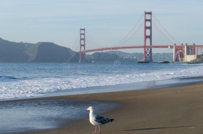 Χρυσή γέφυρα πυλών και Seagull στοκ εικόνες