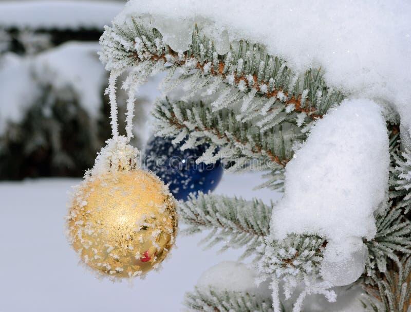 Χρυσή νέα σφαίρα έτους ζωντανό fir-tree με τον παγετό και το χιόνι στοκ εικόνες με δικαίωμα ελεύθερης χρήσης