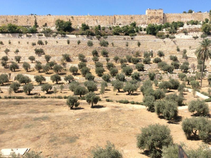 Χρυσή πύλη στην άποψη της Ιερουσαλήμ από τον κήπο Gethsemane, Ισραήλ στοκ εικόνες με δικαίωμα ελεύθερης χρήσης
