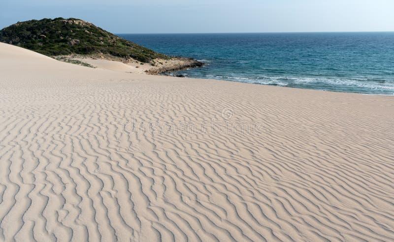 Χρυσοί αμμόλοφοι άμμου στην ακτή στοκ φωτογραφία με δικαίωμα ελεύθερης χρήσης
