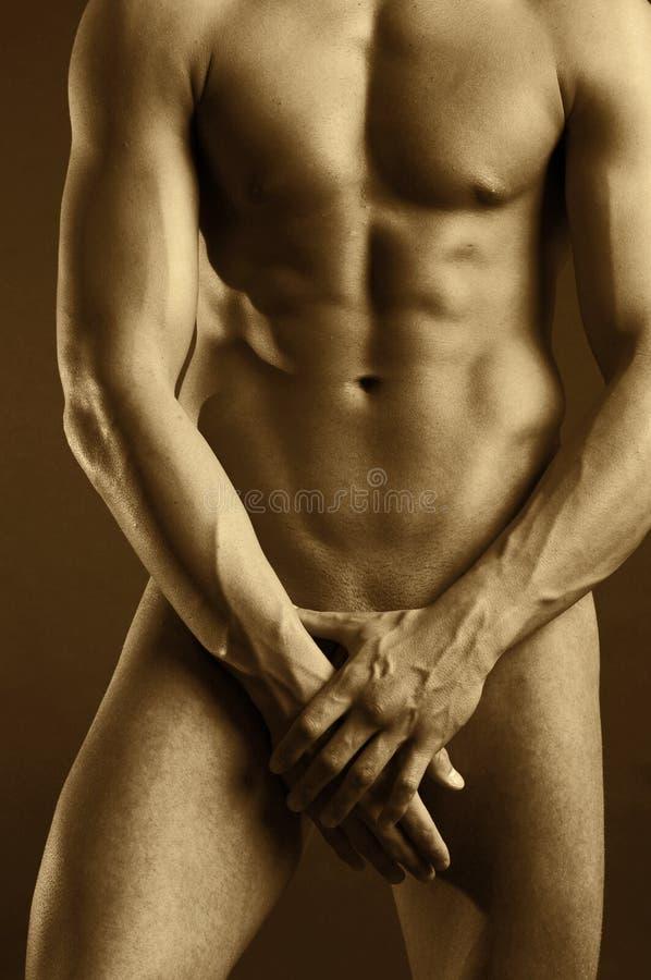 Download χρυσός αρσενικός nude στοκ εικόνες. εικόνα από κοιλιών - 1541806