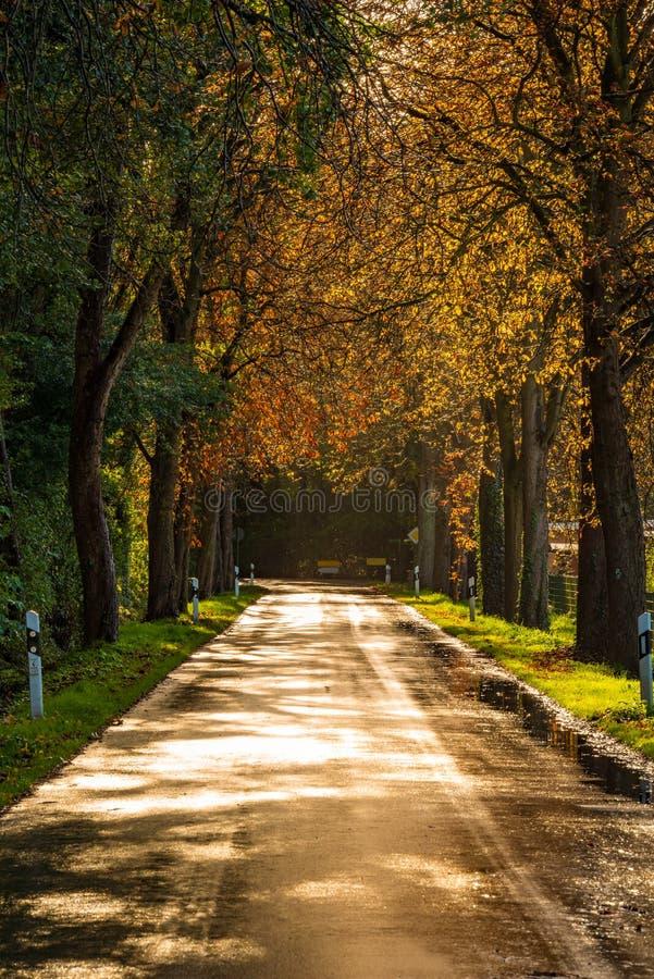 Χρυσός λαμπυρίζοντας δρόμος μετά από τη βροχή το φθινόπωρο στοκ φωτογραφία με δικαίωμα ελεύθερης χρήσης