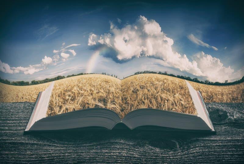 Χρυσός τομέας σίτου στις σελίδες του βιβλίου, τρύγος στοκ φωτογραφίες