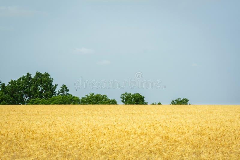 Χρυσός τομέας σίτου του Κάνσας στοκ φωτογραφία με δικαίωμα ελεύθερης χρήσης