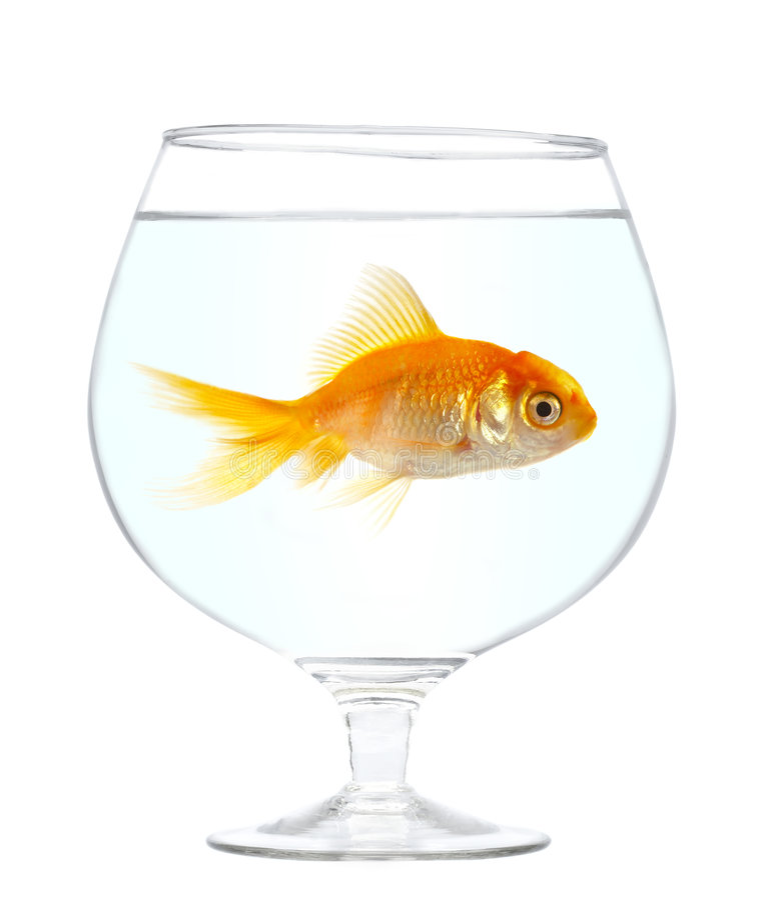 χρυσός ψαριών μικρός στοκ φωτογραφία