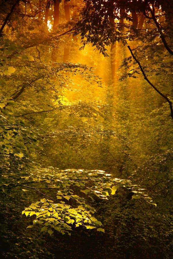 Χρυσό δάσος στοκ φωτογραφία με δικαίωμα ελεύθερης χρήσης