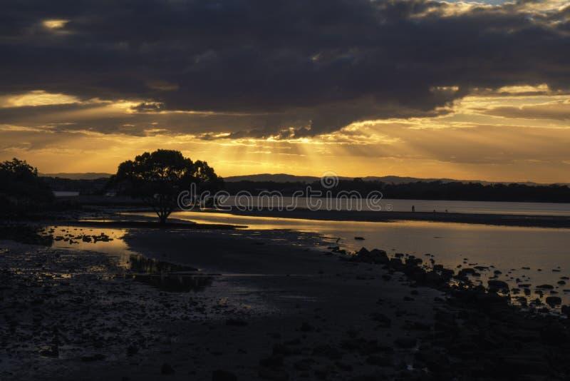 Χρυσό ηλιοβασίλεμα στην παραλία με τη σκιαγραφία δέντρων στοκ φωτογραφία με δικαίωμα ελεύθερης χρήσης