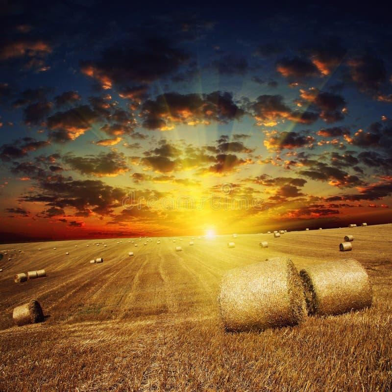 Χρυσό ηλιοβασίλεμα πέρα από τον τομέα με το κριθάρι στοκ φωτογραφία με δικαίωμα ελεύθερης χρήσης