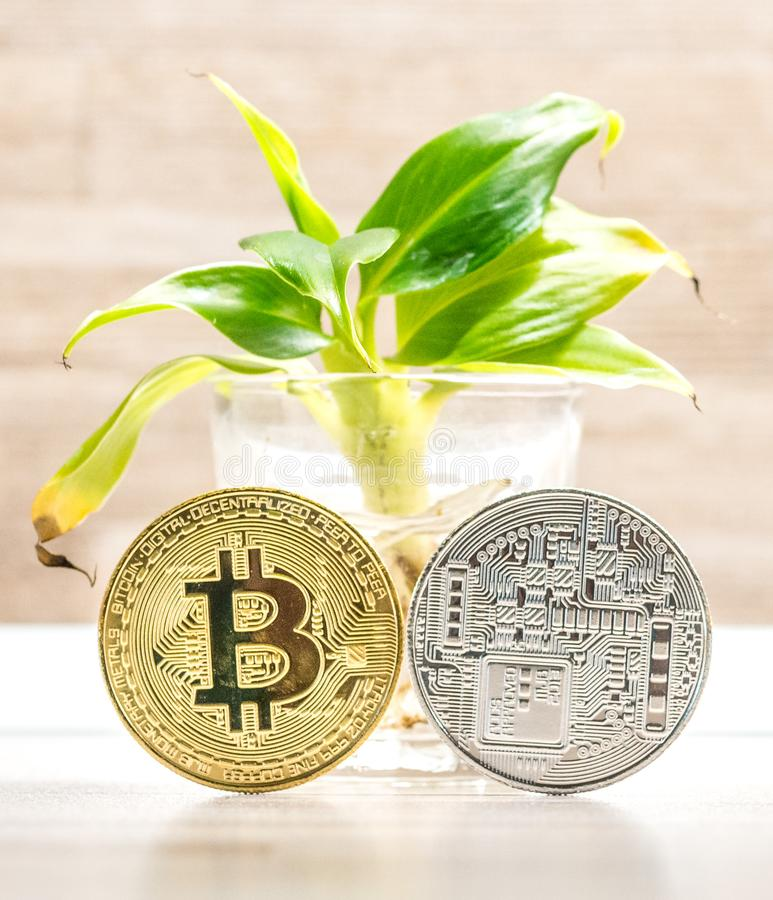 Χρυσό και ασημένιο νόμισμα bitcoin που τοποθετείται κάτω από το μικρό δέντρο μπανανών στο γυαλί Σύμβολο των cryptocurrencies στοκ εικόνα με δικαίωμα ελεύθερης χρήσης