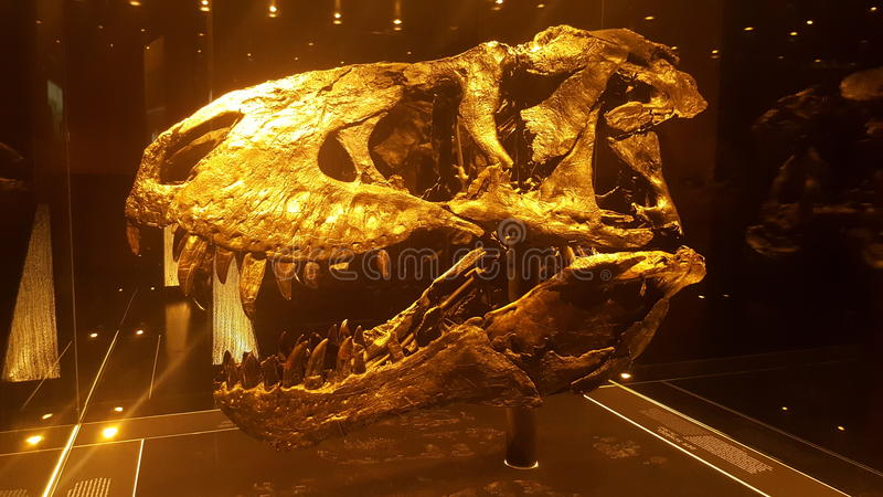 Χρυσό κρανίο τ-Rex στοκ εικόνες