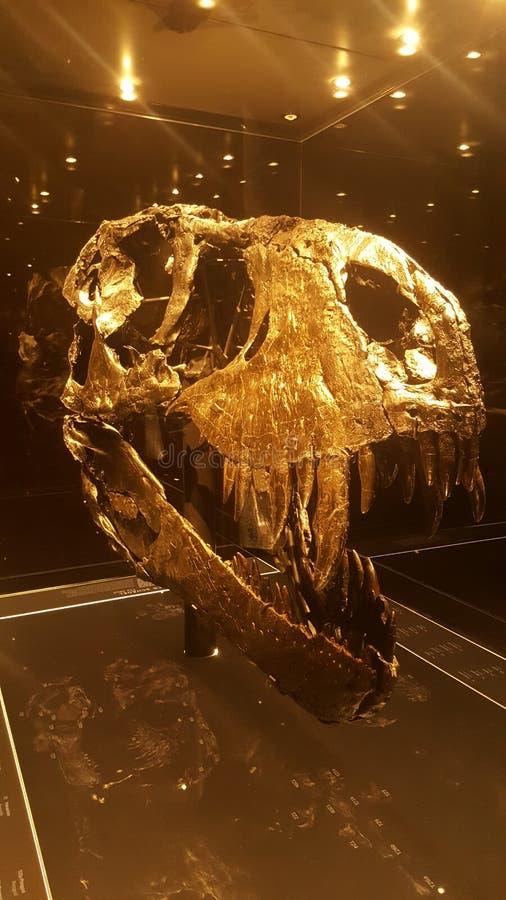 Χρυσό κρανίο τ-Rex στοκ φωτογραφίες