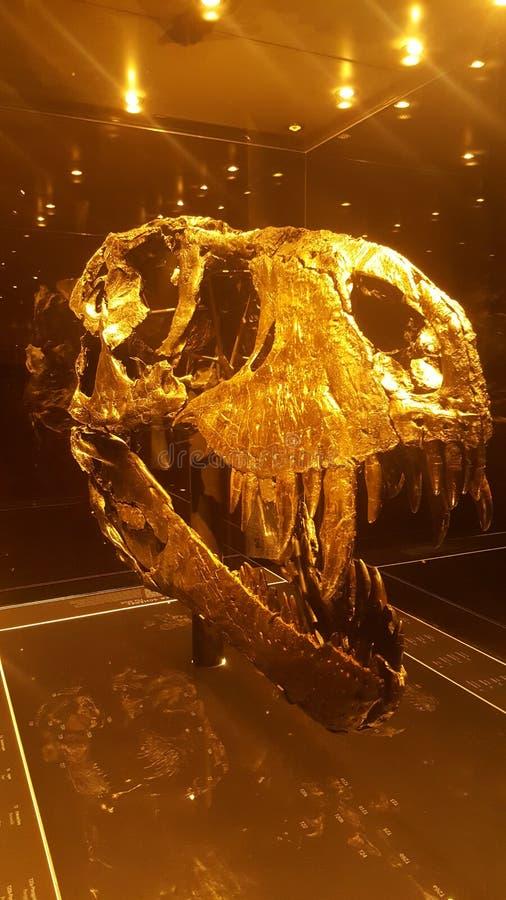 Χρυσό κρανίο τ-Rex στοκ φωτογραφία με δικαίωμα ελεύθερης χρήσης