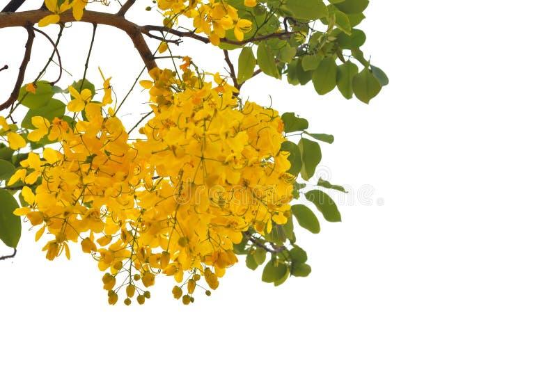 χρυσό ντους στοκ εικόνες με δικαίωμα ελεύθερης χρήσης