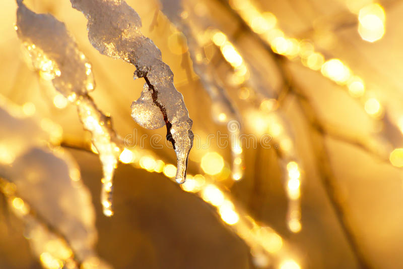 Χρυσό υπόβαθρο χειμερινού ηλιοβασιλέματος στοκ φωτογραφία