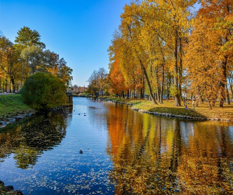 Χρυσό φθινόπωρο στον κήπο Lopukhinsky στη Αγία Πετρούπολη στοκ εικόνα