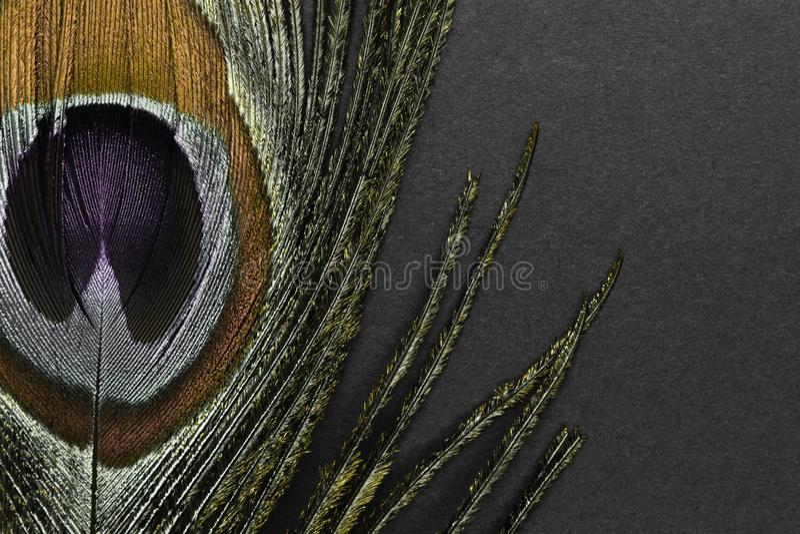 Χρυσό φτερό peacock στο μαύρο υπόβαθρο στοκ εικόνα με δικαίωμα ελεύθερης χρήσης