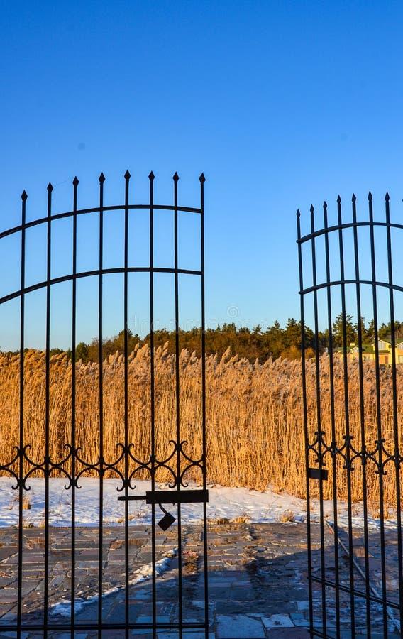 Χρυσό bulrush πίσω από τις ανοικτές πύλες επεξεργασμένου σιδήρου στοκ φωτογραφία με δικαίωμα ελεύθερης χρήσης
