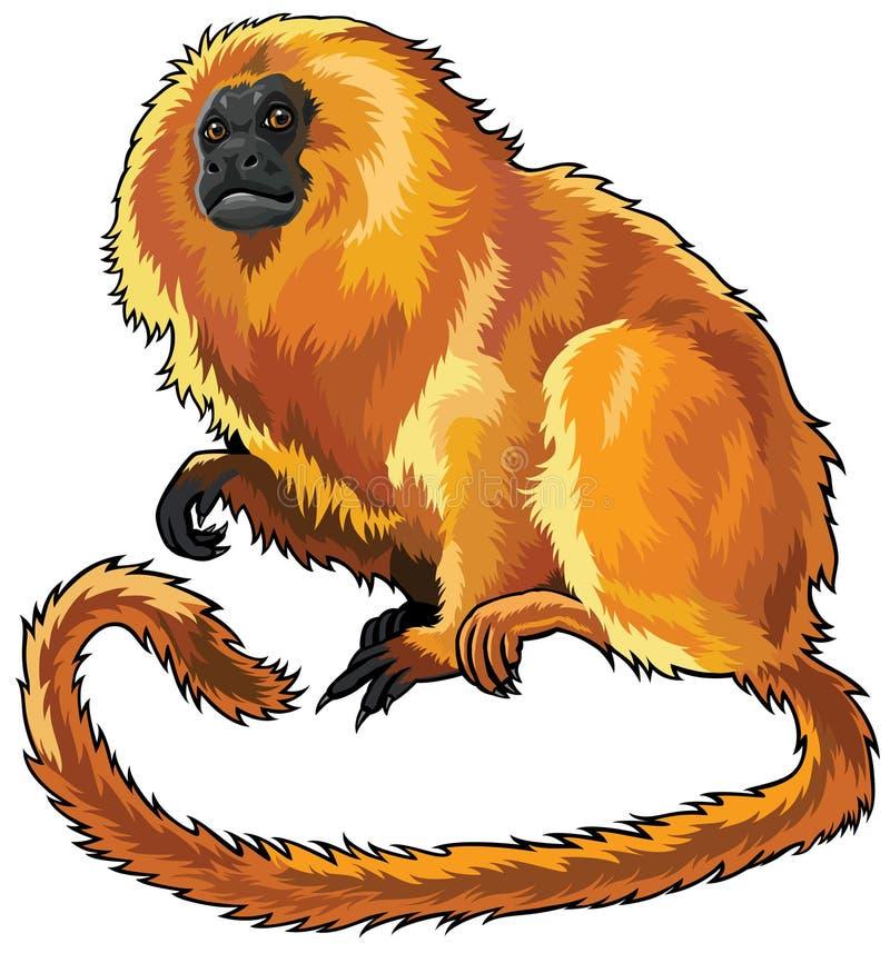 Χρυσό tamarin λιονταριών διανυσματική απεικόνιση