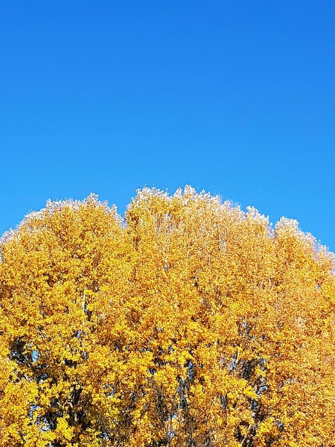 Χρυσό treetop φθινοπώρου στοκ φωτογραφία με δικαίωμα ελεύθερης χρήσης