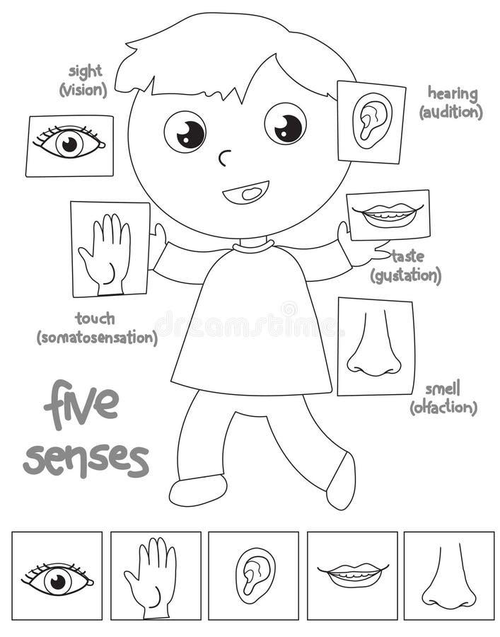 Χρωματίζοντας απεικόνιση αγοριών πέντε αισθήσεων ελεύθερη απεικόνιση δικαιώματος