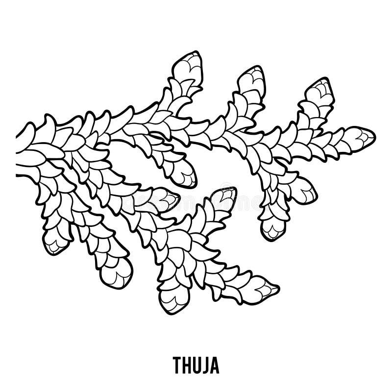 Χρωματίζοντας βιβλίο για τα παιδιά, Thuja ελεύθερη απεικόνιση δικαιώματος
