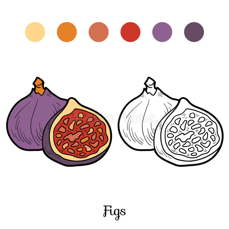 Χρωματίζοντας βιβλίο: φρούτα και λαχανικά (σύκα) ελεύθερη απεικόνιση δικαιώματος