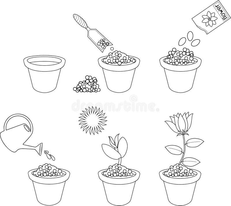 Χρωματίζοντας σελίδα Οδηγίες για το πώς να φυτεψει το λουλούδι σε έξι εύκολα βήματα Έννοια με τα ανθρώπινα ίχνη ελεύθερη απεικόνιση δικαιώματος