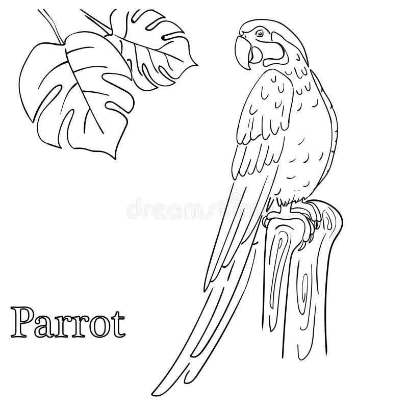 Χρωματίζοντας σελίδες παπαγάλων για τα παιδιά EPS 10 ελεύθερη απεικόνιση δικαιώματος